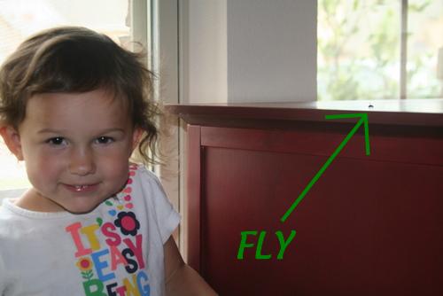 fly caroline
